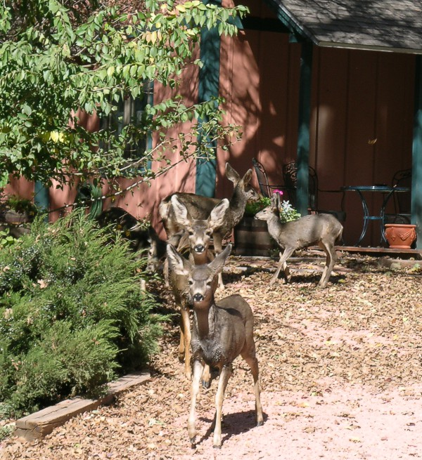 Wildlife at Blue Skies Inn, Colorado