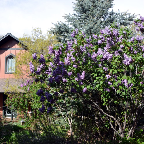 Ga	rdens Blue Skies Inn - Bed and Breakfast in Manitou Springs, Colorado